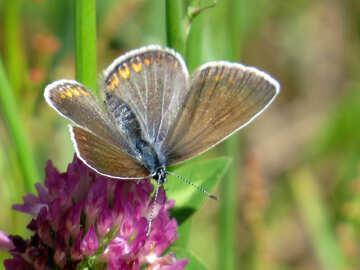 Butterfly Field №24646
