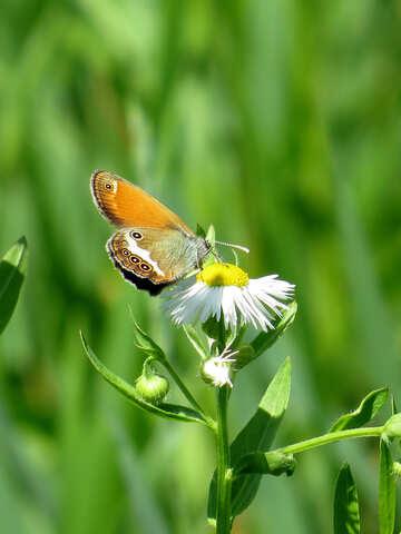 Butterfly on flower №24988