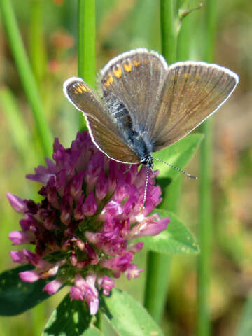 Little butterfly №24645