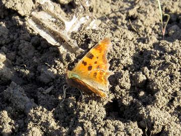 Butterfly on trash №24368