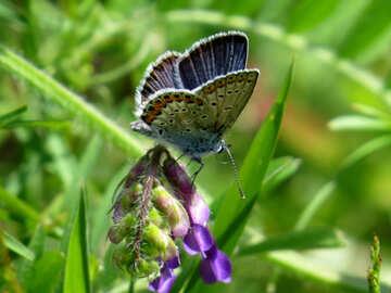 Beautiful butterfly №24643