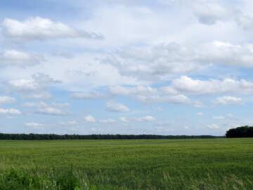 Crops №24225