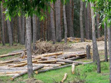 Deforestation №24705