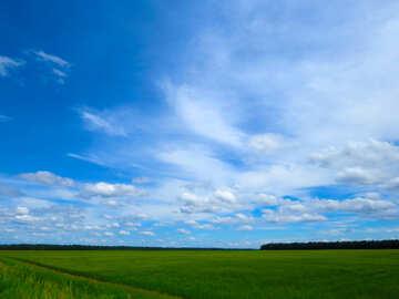 Field №24208