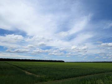 Green field №24206