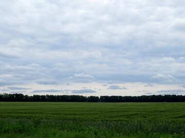 Green field №24720