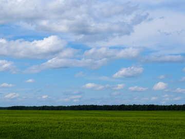 A field of wheat №24220