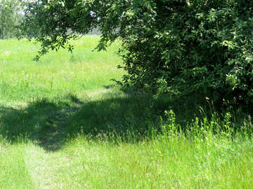 Road in the grass №24992