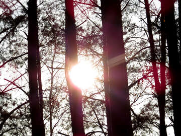 Sol forestal №24773