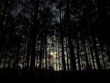 Crepúsculo №24806
