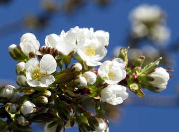 Delicati fiori №24482
