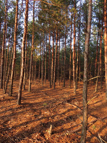 Sunlight in autumn forest №24796