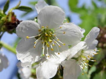 Stagione di fioritura №24043