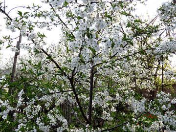 Blooming Garden №24132
