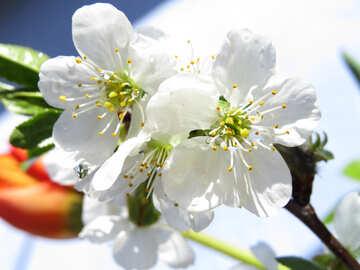 Primavera desktop №24049