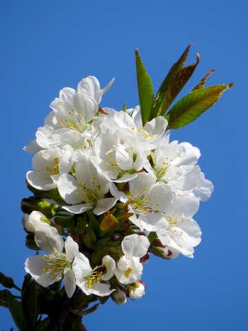 Fruit Flower №24409