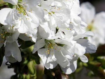 Macro white flower №24491