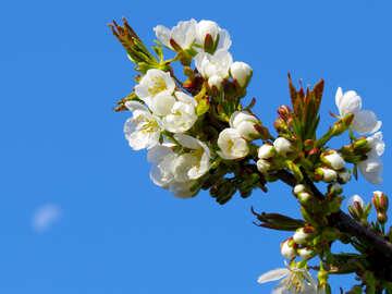 Profumo di primavera №24406