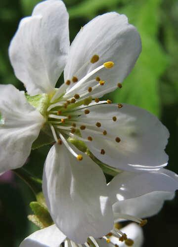 Fiore di primavera №24064