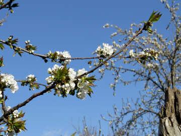 Spring in the garden №24435
