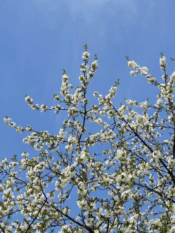 Cielo di primavera №24141