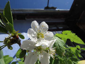 Spring in the village №24074
