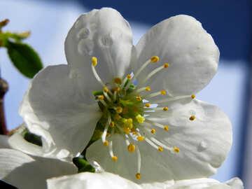 Fiore bianco №24041