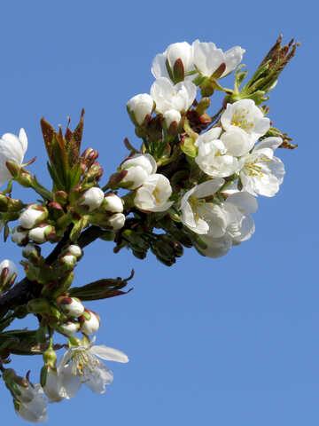 Flowers Trees