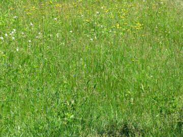 Green grass №24981