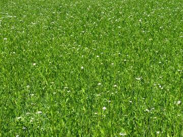 Green lawn №24993