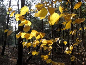 Early autumn №24872