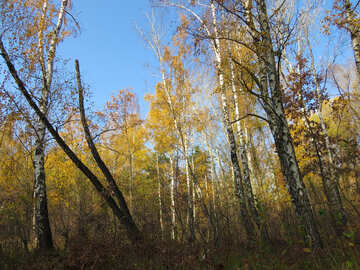 Fall in forest №24905