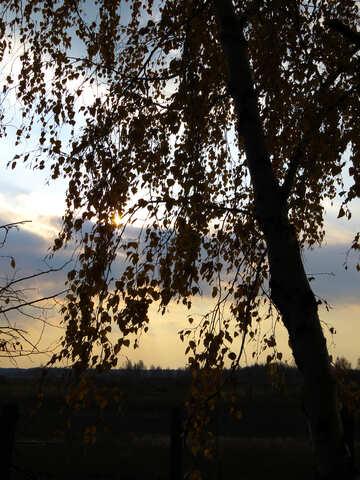 Autumn Sunset №24820