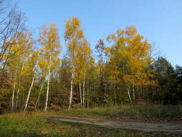Wallpaper beautiful autumn landscape №24894