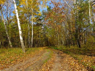 Autumn road №24893