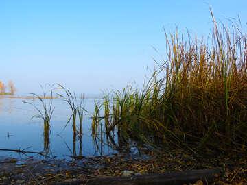 Reeds №24899