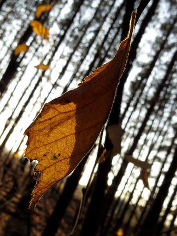 Autumn leaf №24766