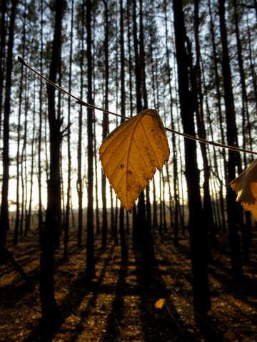 Autumn leaf on branch №24760