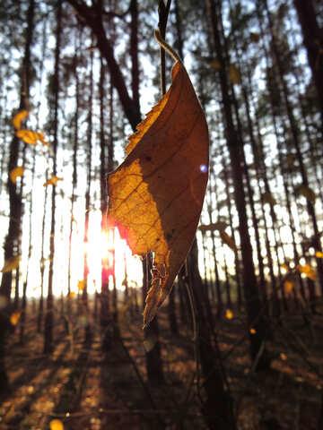Leaf on gleam №24765