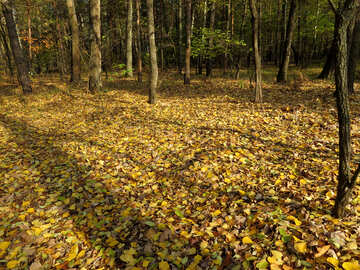 Leaf litter №24889