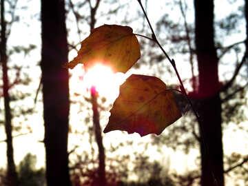 Last ray of sunshine №24792