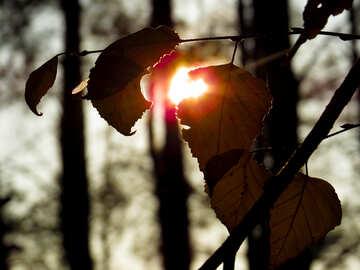 Sunlight №24772