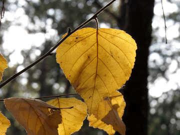 Autumn foliage №24871