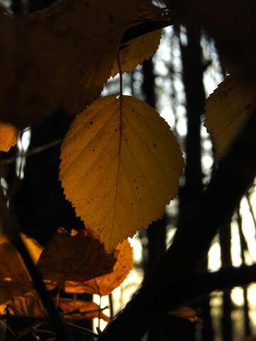Flies foliage №24753