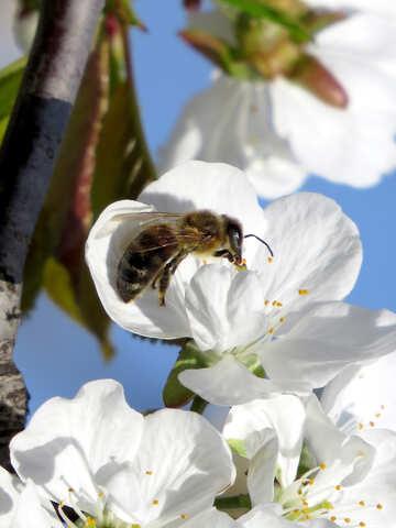 Bee macro №24431