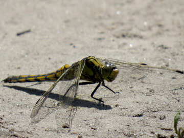 Beautiful photo of dragonfly №24969