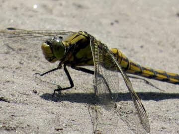Macro libellula №24970