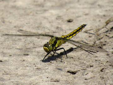 Dragonfly on desktop №24956