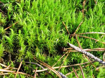 Wild grass №24877