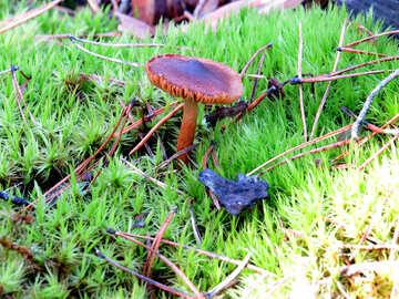 Old mushroom №24875